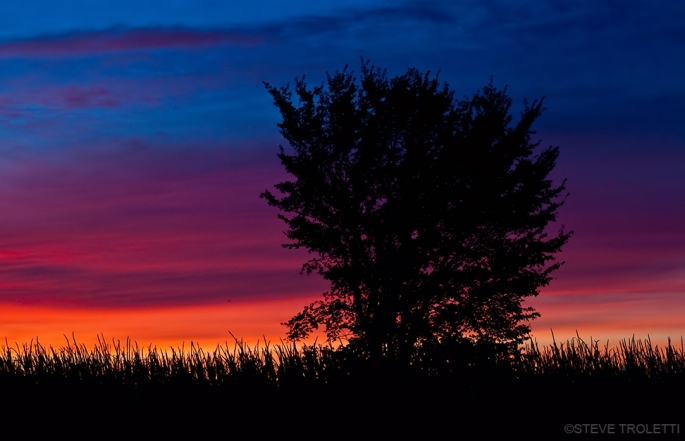 Silhouette of Tree at Twilight