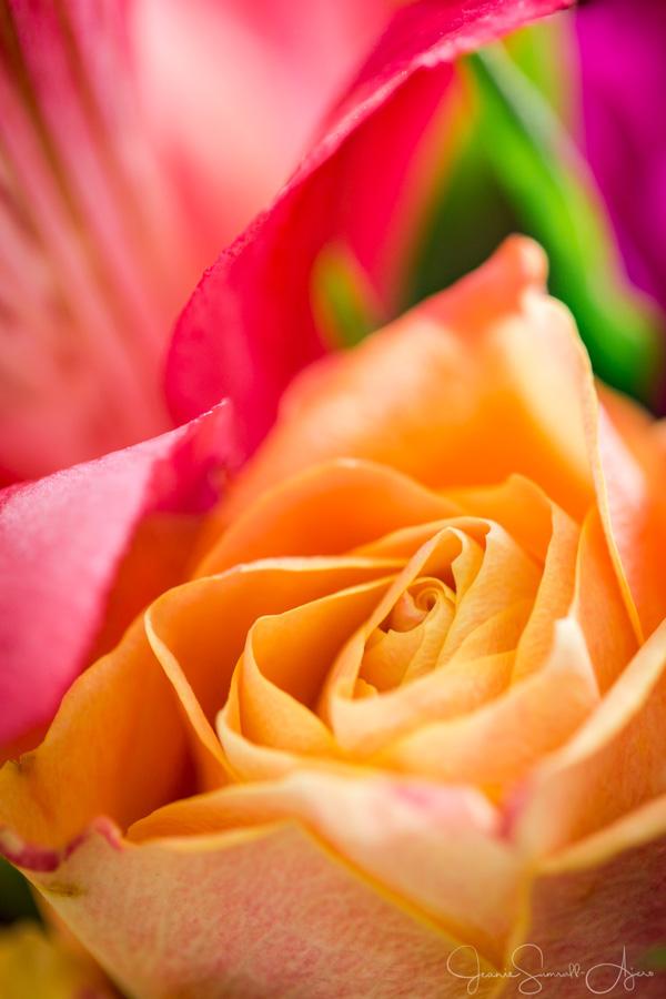 color-flowers-proper-exposure