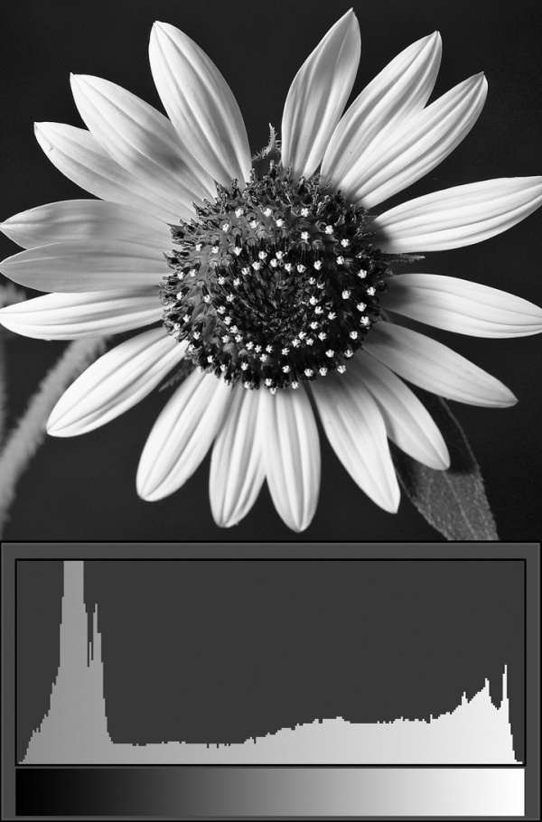 sunflower-bw-full-with-histo
